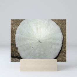 Tiny sand dollar Mini Art Print