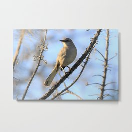 Bird Photography -Mockingbird - I Finally Found You Metal Print