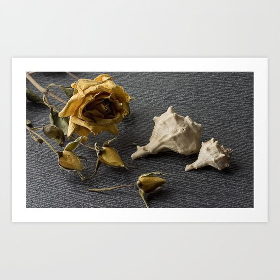 Flowers and conch shells. Art Print
