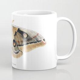 Oculea Silkmoth (Antheraea oculea) Coffee Mug