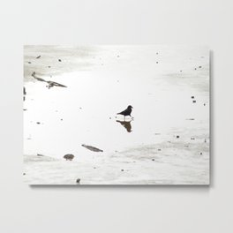 Crow doing a dance in a puddle Metal Print