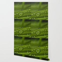DROPS 5 Wallpaper