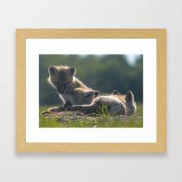Fox kits Framed Art Print