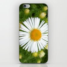 white aster iPhone & iPod Skin
