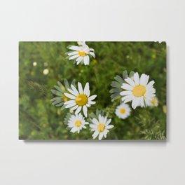 Daisies in a Blur Metal Print