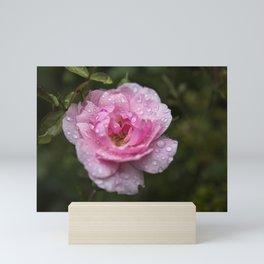 Pink Rose with Raindrops Mini Art Print