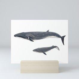 Sei whale (Balaenoptera borealis) Mini Art Print