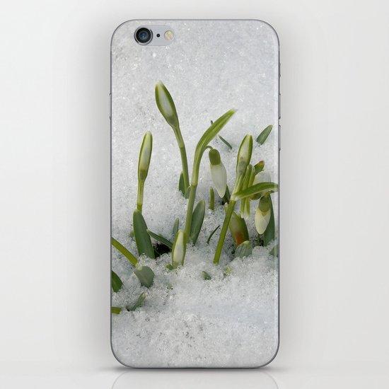 snowdrop II iPhone & iPod Skin