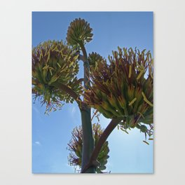 Agave Flower Canvas Print