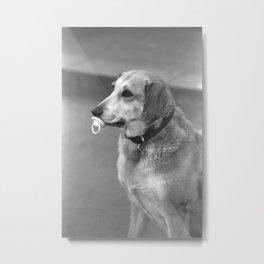 BabyDog Metal Print