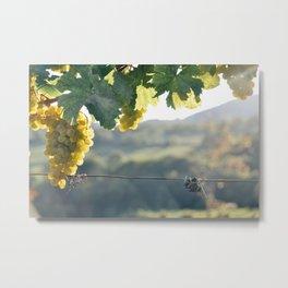 Austrian Vineyard Metal Print