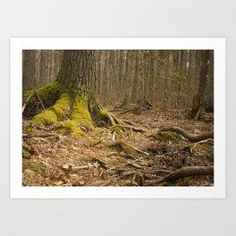 Mossy Woods - Ridge Hill Reserve Art Print
