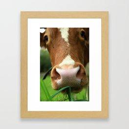 Cow, meadow, animal Framed Art Print