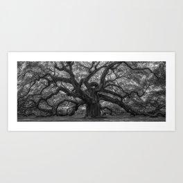 1,500 Year Old Angel Oak Tree of Charleston, South Carolina black and white photography / photograph Art Print