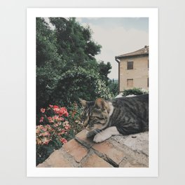 There are no ordinary cats Art Print