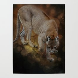 A Mountain lion's decent Poster
