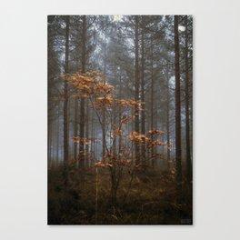 Tears of Autumn Canvas Print