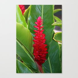 Red Ginger and Bee Canvas Print