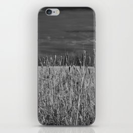 Cattails and reeds in the marsh iPhone Skin