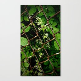 Flowers in the Chainlink Fence Canvas Print