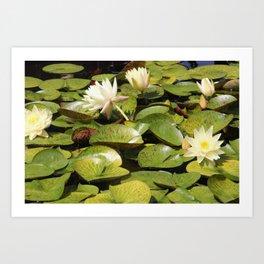 Lingering Lily Pads Art Print