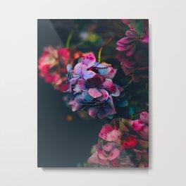 Beautiful Purple Blue Summer Hydrangea Dark Green Sensual Leaves Metal Print