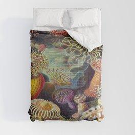 Ernst-haeckel-Actiniae Comforters