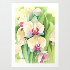 Cascading orchids Art Print