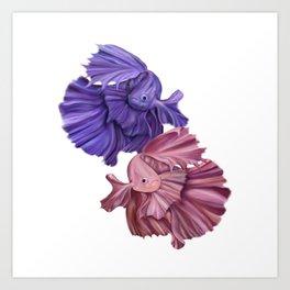 Fighting Fish - Large Variation Art Print