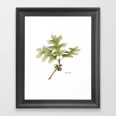 Pin Oak Framed Art Print