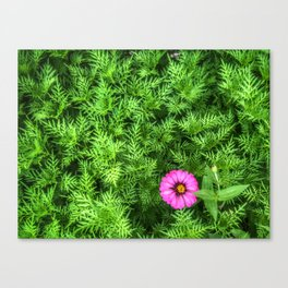 Top view of Yellow cosmos or Sulfur cosmos bush with a blooming pink Zinnia flower. Canvas Print