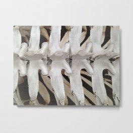 Dinosaur Ribs Metal Print