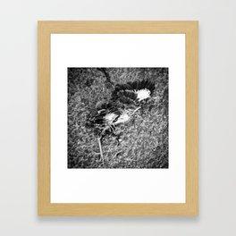 Casualty Framed Art Print