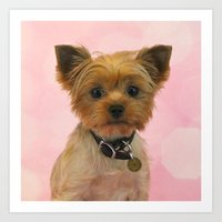 yorkie Art Prints featuring Yorkie by My Petunia