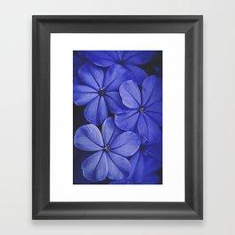 Purple/Blue Framed Art Print