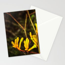 Yellow Kangaroo Paw flower against a blurred background Stationery Cards
