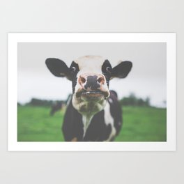Funny Cow Photography print Art Print
