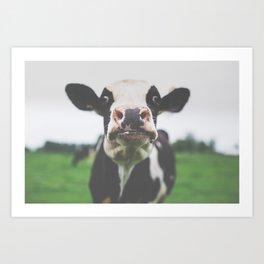 Funny Cow Photography print Art Print