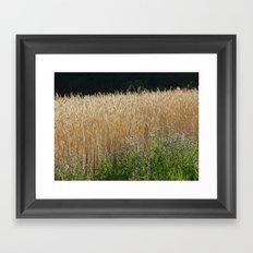 Field of summer Framed Art Print