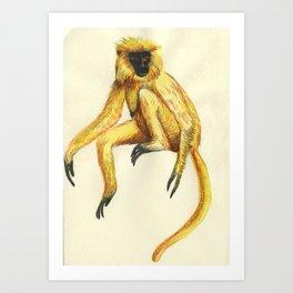 Gee's golden langur Art Print