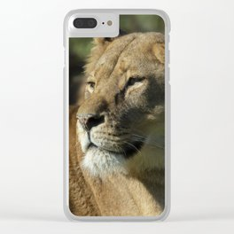 Lioness stare Clear iPhone Case