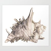shell Art Prints featuring Shell by RasaOm