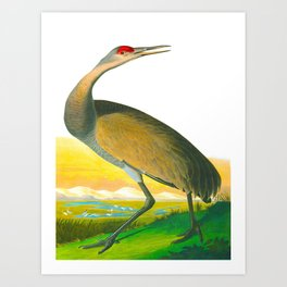 Vintage Crane Drawing Art Print