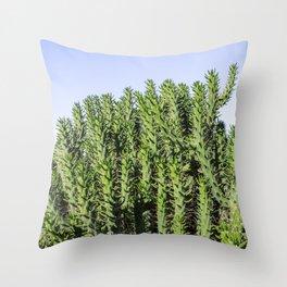 Cactus Photography - Green Cactus Decor - Cacti Art Throw Pillow
