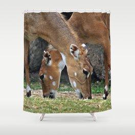 Persian Gazelle Shower Curtain
