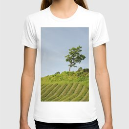 Tree, Azores Island T-shirt