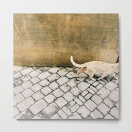 Cat tail Metal Print