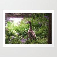 duck Art Prints featuring Duck by Terri Ellis