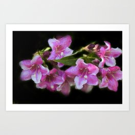 blossoms on black background -02- Art Print