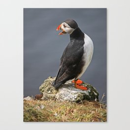 "[impressions of scotland] - puffin ""little squaller"" Canvas Print"